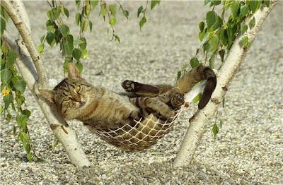 Gato en Hamaca