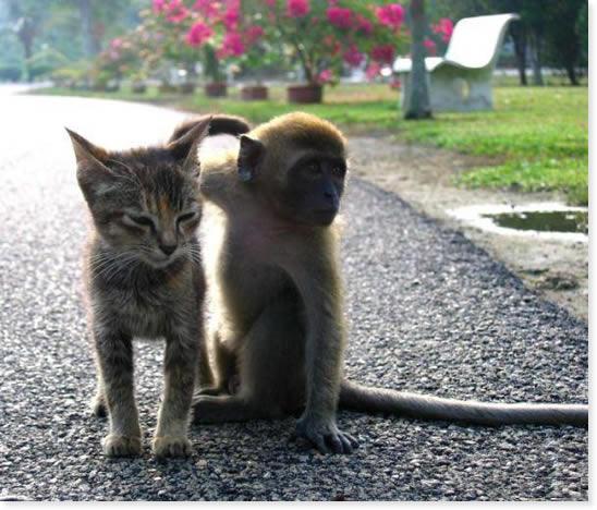 Animales Graciosos