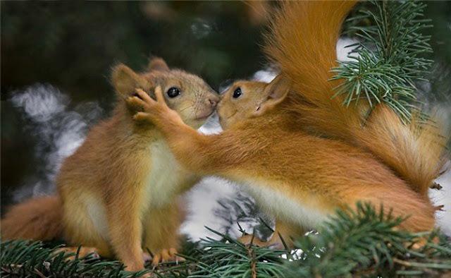 Amorosos Animales