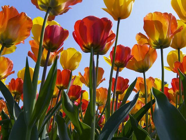 Fotos de Hermosas Flores 5