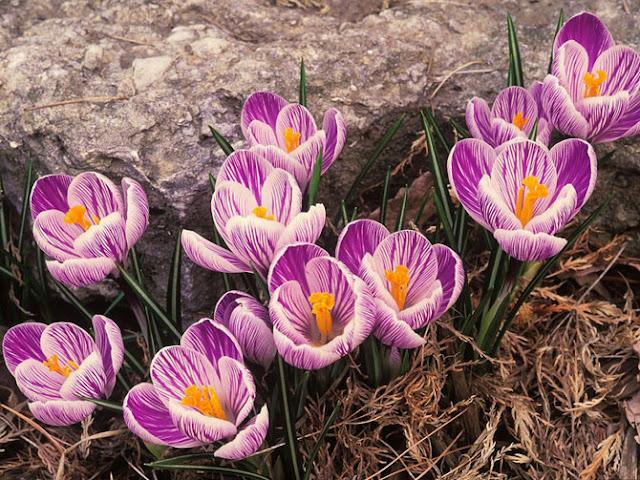 Fotos de Hermosas Flores 13