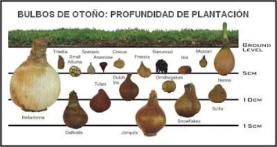 Bulbos de oto o jardinelfo - Bulbos de otono ...