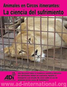 Animales en Circos itinerantes: La ciencia del sufrimiento...