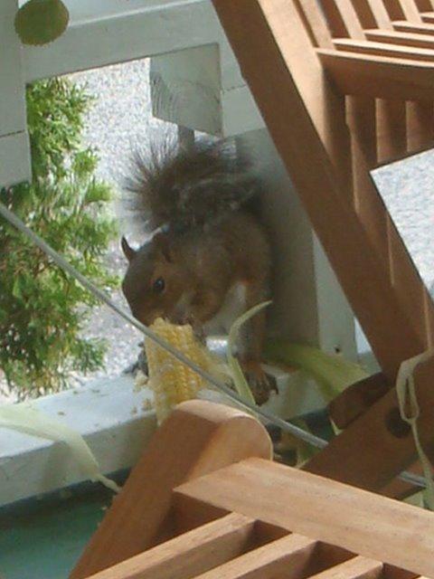 [squirrel+1.JPG]
