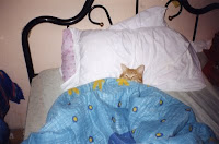 Sleeping cat wrapped up in balnket on a bed