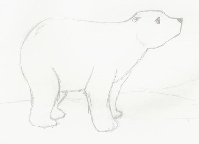 EDUCACIÓN FÍSICA ACTUAL: 27 de febrero, día del Oso Polar: