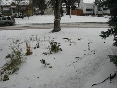 Winter Front Garden