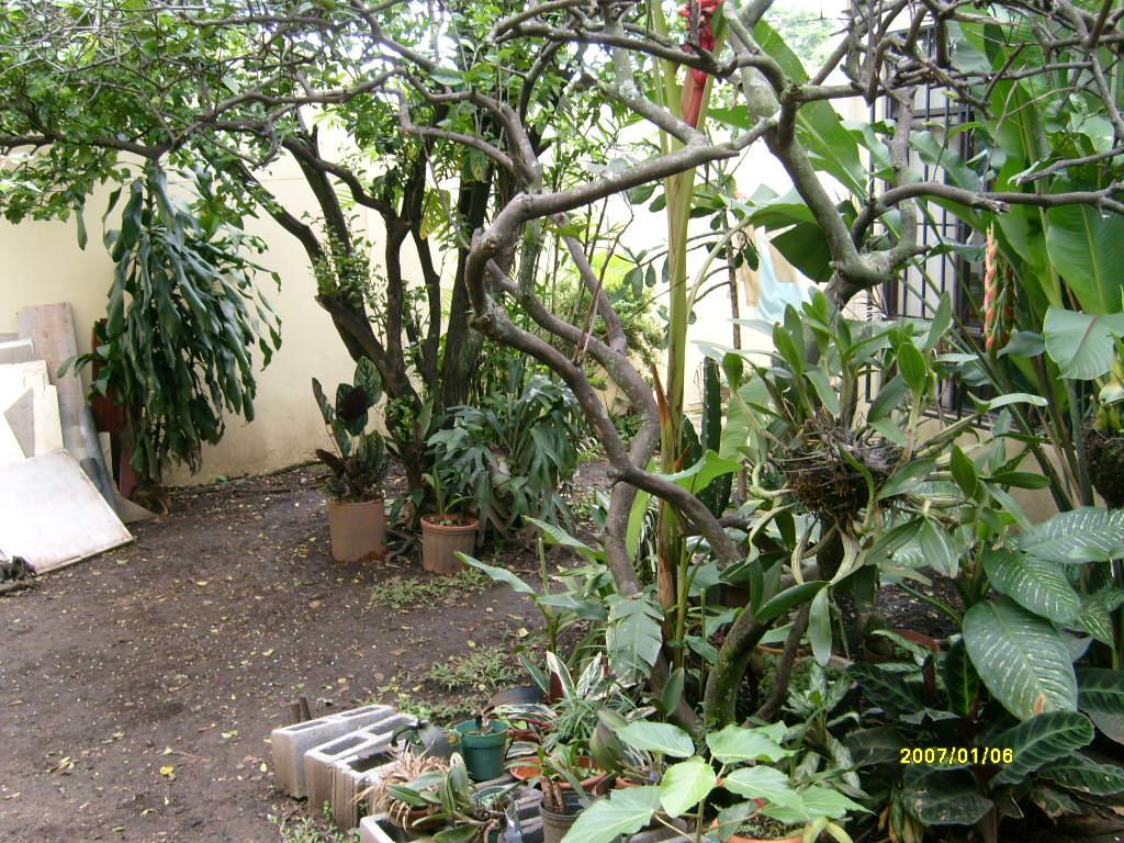 Mantenimiento y dise o de jardines remodelaci n de un - Mantenimiento de un jardin ...