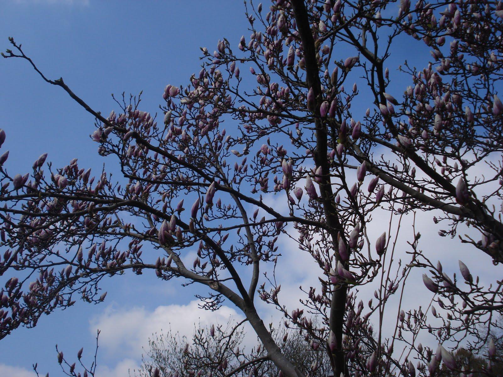 Agora as árvores não são mais secas e o céu é azul e o passeio  #405E8B 1600x1200 Banheiro Cachorro Grama