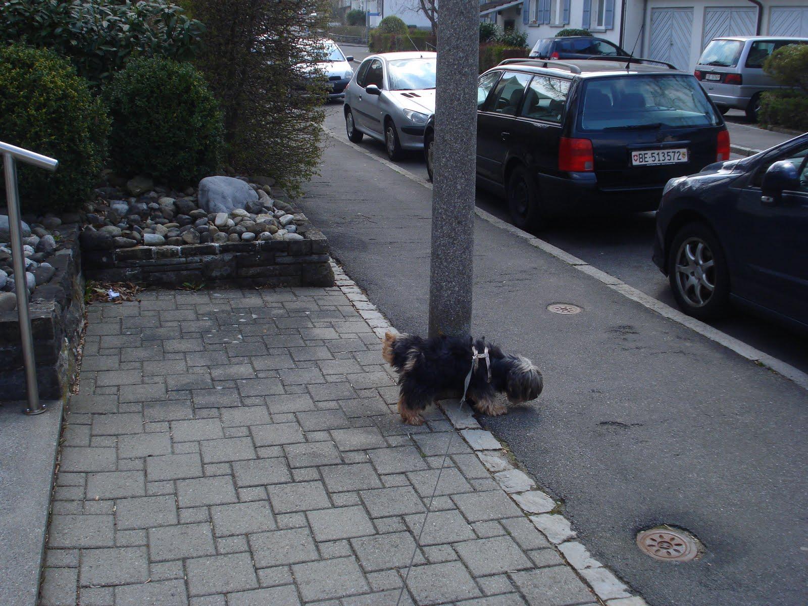 Não pode mais fazer xixi na grama então ele virou amigo dos postes. #613335 1600x1200 Banheiro Cachorro Grama