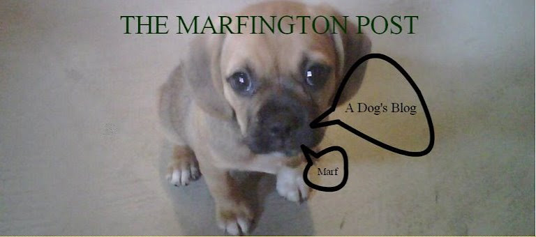 THE MARFINGTON POST