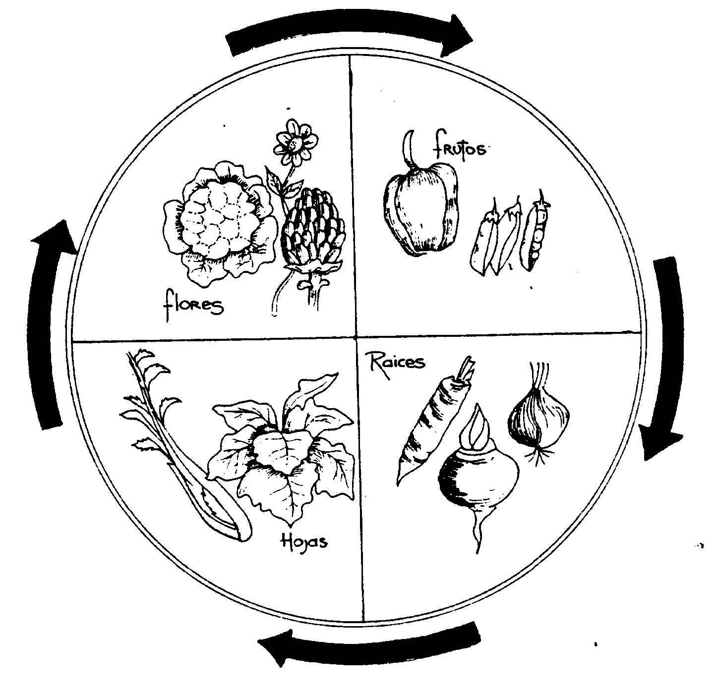 Agricultura ecologica enero 2011 Rotaciones de cultivos ecologicos