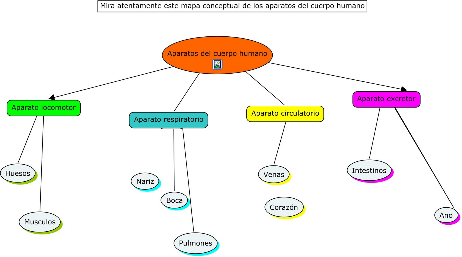 3AMARENOSTRUM: Mapa conceptual de los aparatos del cuerpo humano.