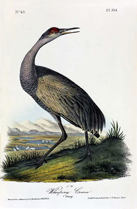 Friday Crane Blogging Sandhill On John >> Art Aprreciation 10 10 11 00 Week 1 Sandhill Crane
