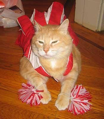 kitty cat cheerleader