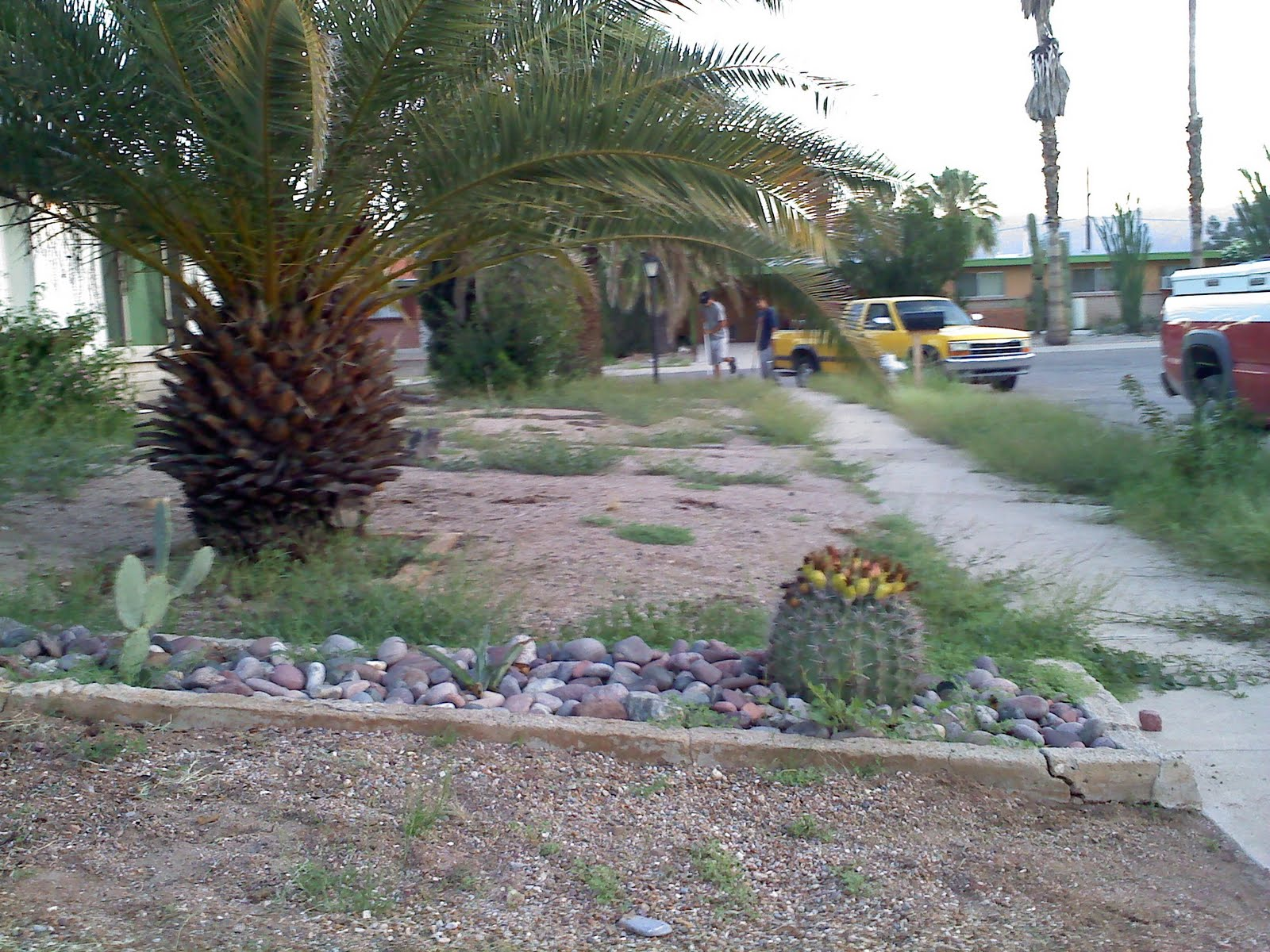 Tucson quality landscaping low cost tucson yard service for Cost to landscape front yard