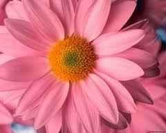 Bach virágterápia Kérd e-mailban tesztünket!