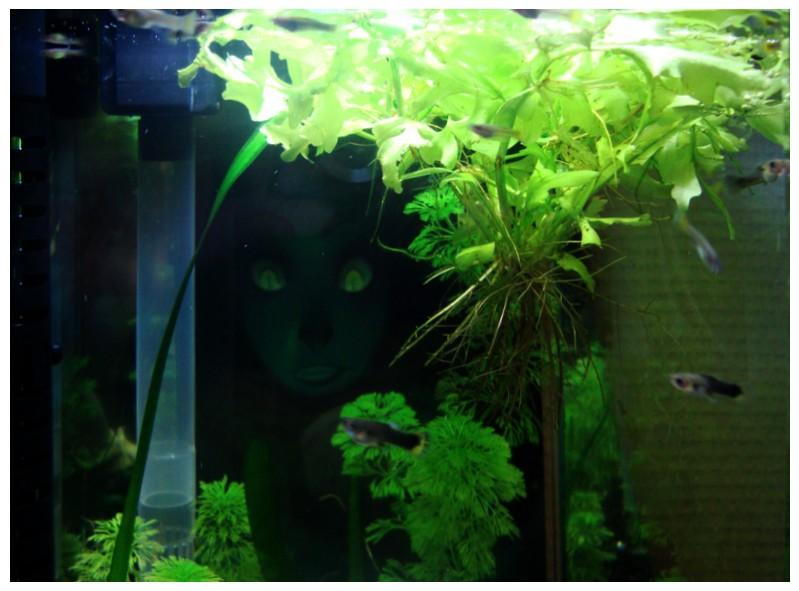 Bienvenue dans notre aquarium un fond original pour l for Petit aquarium original