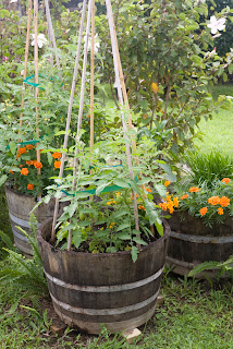 Many Gardeners Believe That Certain Plants Seem To Do Better If Planted  With Ones That Are Compatible. We Know That The Roots Of Some Plants Are ...