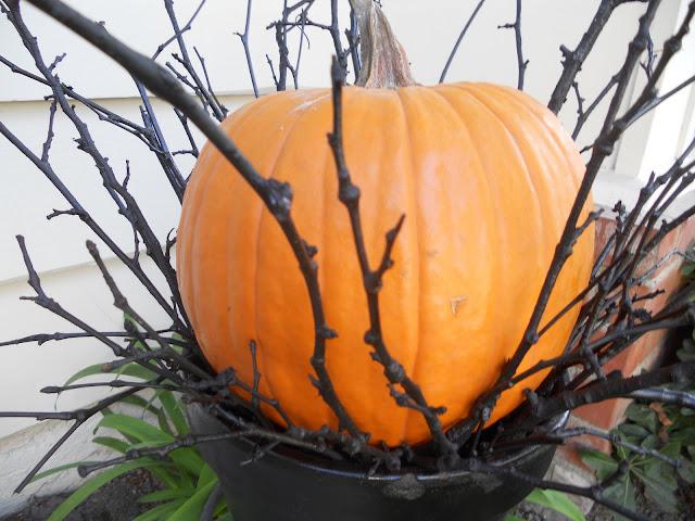 orange pumpkin with black twigs
