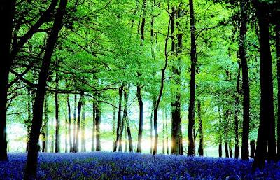 Di musim semi, banyak sekali hutan di eropa yang tiba-tiba seakan