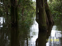 Inside the inundation forest