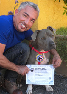 Psychiatric Service Dog Certification Test