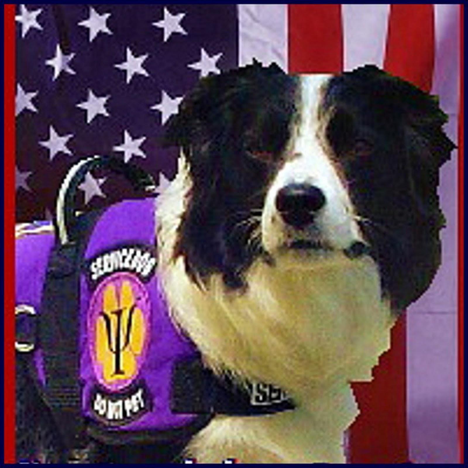 Oregon Psychiatric Service Dogs