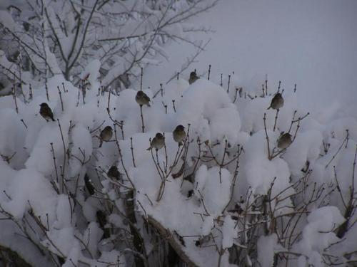 [birds+in+snow]