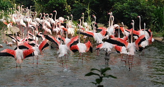 Flamingoes in Hong Kong park
