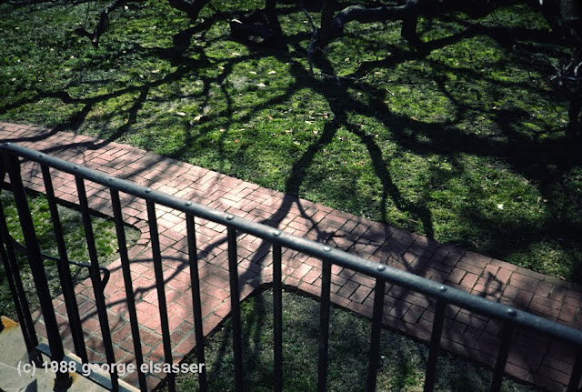 """image of oak tree shadow"" (c) george elsasser"