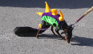 Dog in dragon costume that looks a little tight in the inseam.