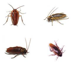Consejos para el hogar cucarachas - Eliminar insectos en casa ...