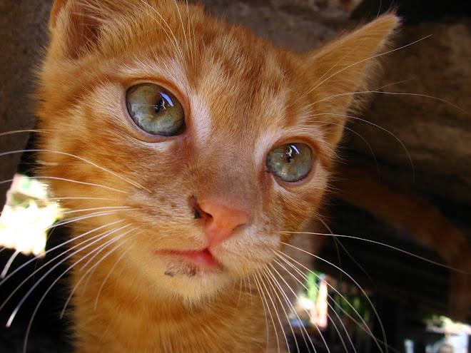 My emo cat