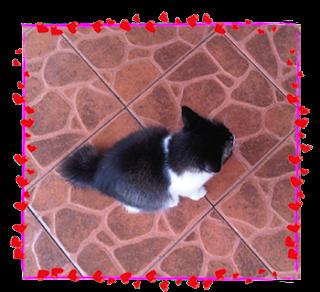 Cara Nak Atasi Kucing Yang Banyak Bercakap My Dearcats Dc