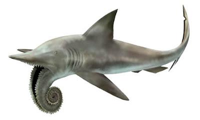 ปลา ฉลาม แปลก