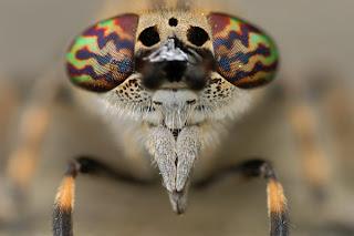 แมลงปอ