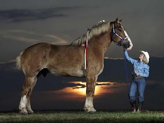 ม้า ที่ตัวใหญ่ที่สุดในโลก
