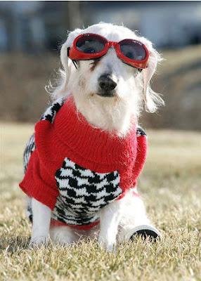 สุนัข อายุมากที่สุดในโลก 21 ปี