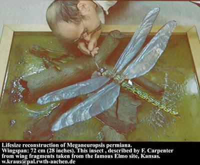 แมงปอยุค ไดโนเสาร์