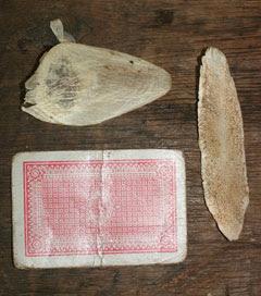 ลิ้นปลาช่อนอเมซอนใช้ทำกระดาษทรายได้