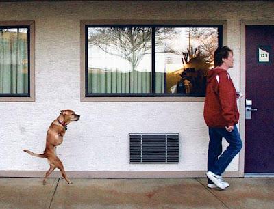 เฟธ สุนัขสองขา สู้ชีวิต