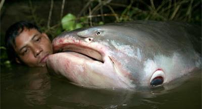 ปลาบึก ปลาอายุยืนที่สุดในโลก