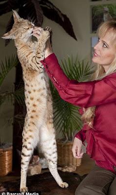 แมวที่สูงที่สุดในโลก