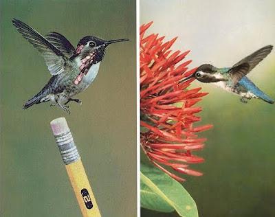 นก ตัว เล็กที่สุดในโลก