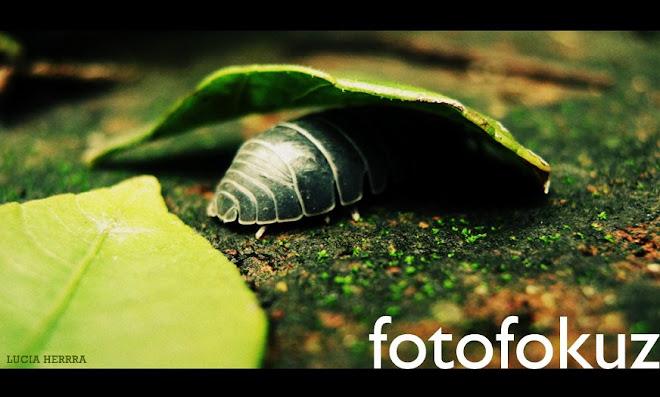 FOTOFOKUZ