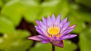 KWIATY I ZIELENINKA (tapety kwiaty flowers )