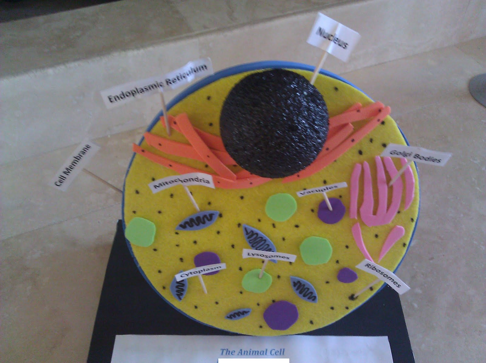 Animal Cell 3D Science Project http://ivebecomemymother.blogspot.com/2010/11/cell-project.html