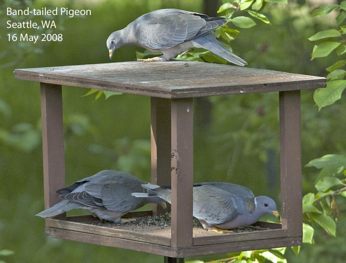 bird feeders cages feeder proof unlimited birds wild squirrel