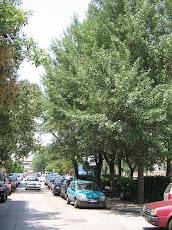 Ο πόλεμος ενάντια στα δέντρα και τους ελεύθερους χώρους συνεχίζεται